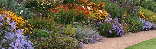 dekker philippe horticulteur bernay 77 producteur de bissannuelles plantes de. Black Bedroom Furniture Sets. Home Design Ideas
